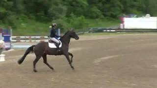 Video of S&L Fandango ridden by Candice King from ShowNet!