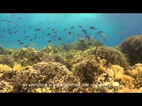 Coral Gardening - Recreating the ocean's lifecycle