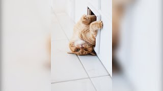 99.9 % CHANCE that you will FAIL to CONTROL your LAUGHTER! - Funny CAT compilation
