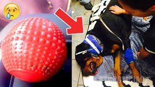 Compró este indefenso juguete a su perro, al otro día es testigo de una desgracia. ¡CUIDADO!
