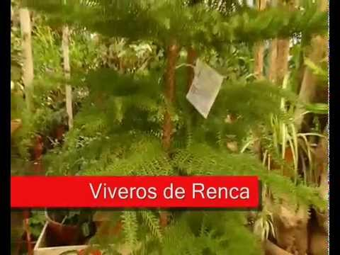 Los viveros de renca youtube for Viveros en renca