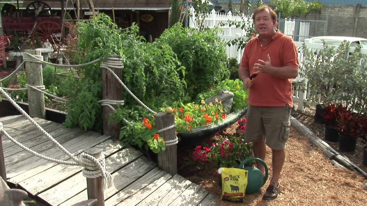 Maintaining A Garden : Vegetable Gardening For Beginners   YouTube