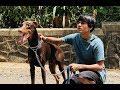 DOG SHORT FILM   BIG POCKET    MOHAK MEET