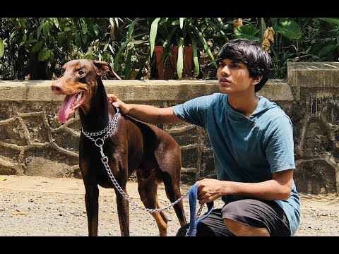 DOG SHORT FILM | BIG POCKET || MOHAK MEET || SEEMA