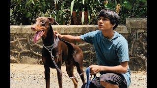 DOG SHORT FILM | BIG POCKET || MOHAK MEET