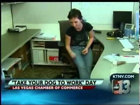 Las Vegas Chamber of Commerce -Bring Your Dog To Work Day Ch13, KTNV