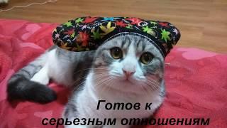 Кот в активном поиске. Приколы с котами.