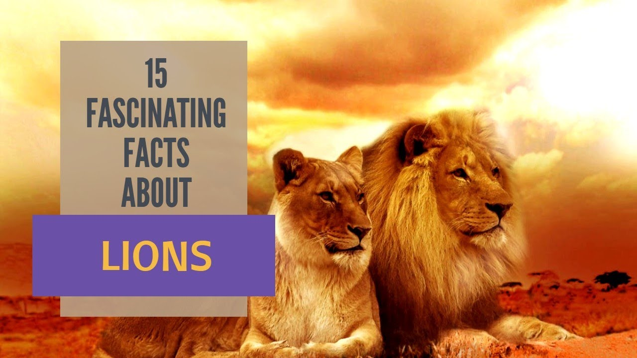 15 FASCINATING FACTS ABOUT LIONS