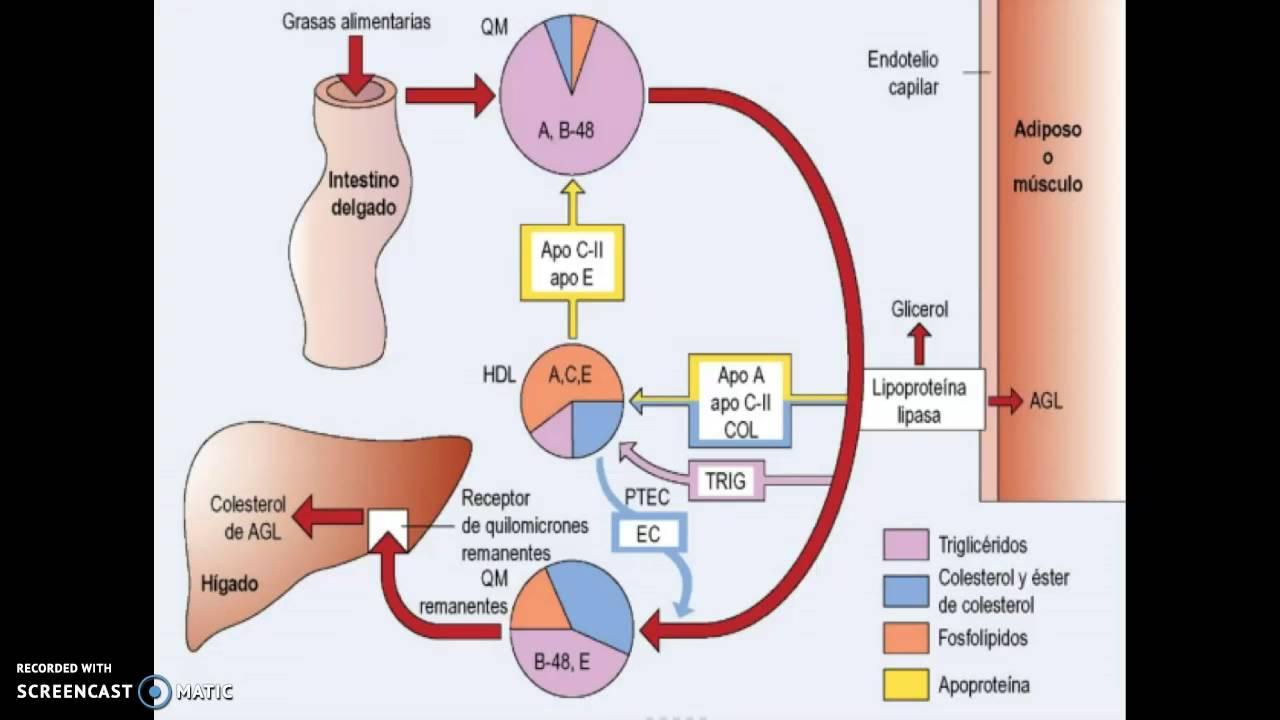 Transtorno clinico del metabolismo de los lípidos - YouTube