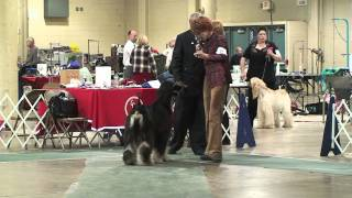 Afghan Hound Club Of Greater Columbus Specialty Regular Classes 11-20-11