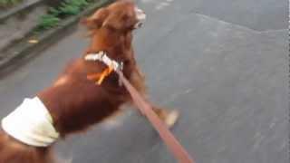 シェリさん、走ってお散歩.