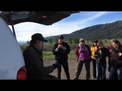 Rick McIntyre and Yellowstone Wolf Project
