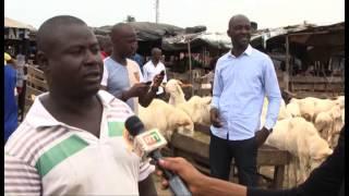 TABASKI: Approvisionnement des marchés en bétail