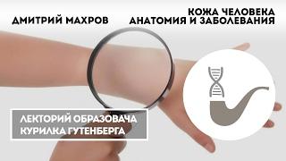 Дмитрий Махров - Кожа человека. Анатомия и заболевания