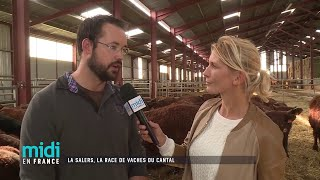 La Salers, la race de vaches du Cantal