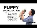 PetSmart Puppy Training: Socialization