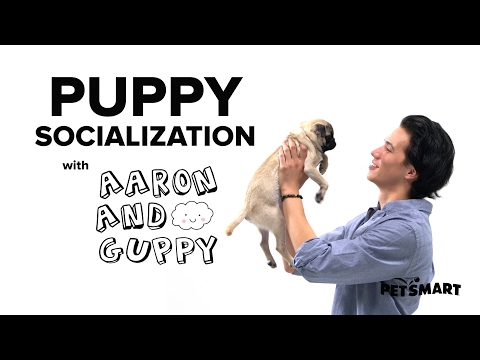 PetSmart Puppy Training: Socialization