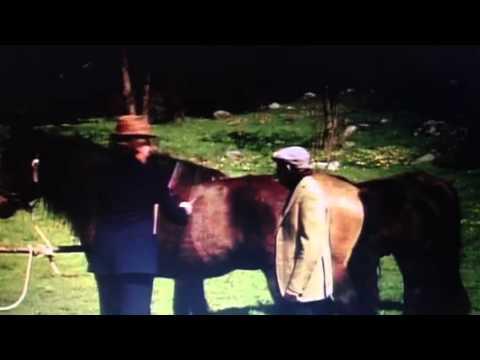nöjesmaskinen spela på hästar