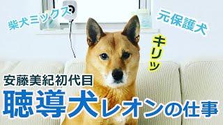 聴導犬レオンのお仕事ぶりを紹介します。 特定非営利活動法人MAMIE http...