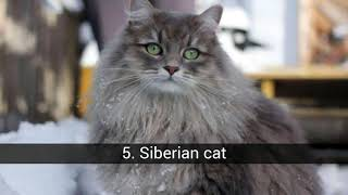 These are the 10 most popular cat breeds in the world