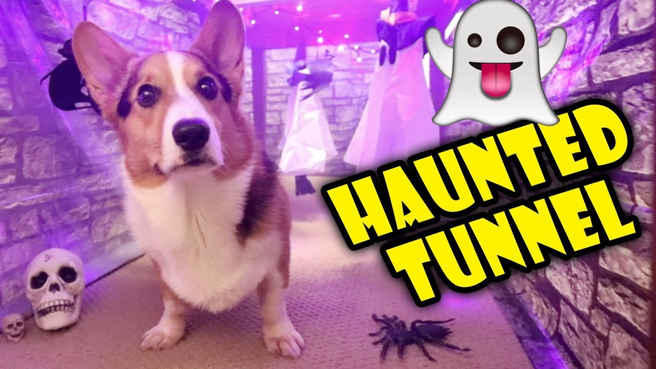 building-a-corgi-sized-haunted-house-life-after-college-ep-614