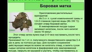 Боровая матка(http://travmag.ru/item/borovaya-matka.html купить целебные травы в нашем интернет магазине трав., 2014-03-21T15:38:50.000Z)