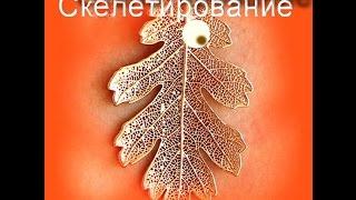 Выпуск №21 Скелетирование листьев. Украшения в технике Скелетон.