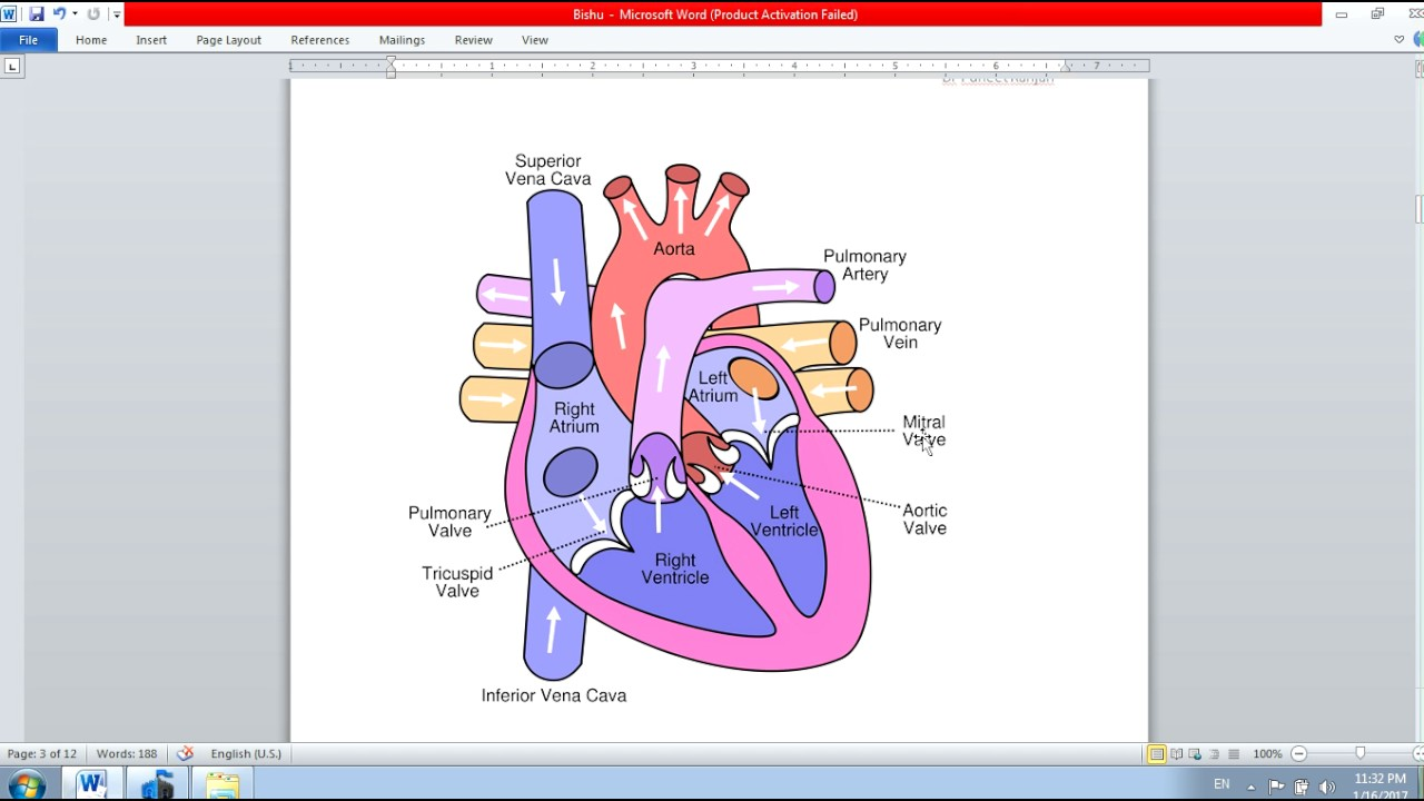Icse Class 10th Biology The Circulatory System Heart Part 4