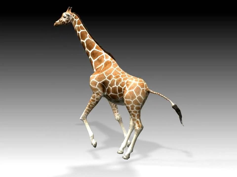 Анимация картинки жираф, день супруга
