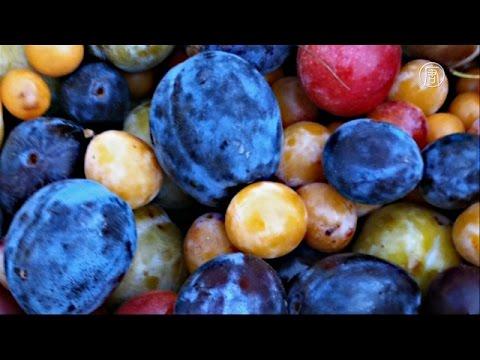 Дерево-гибрид с 40 видами фруктов растёт в США (новости)