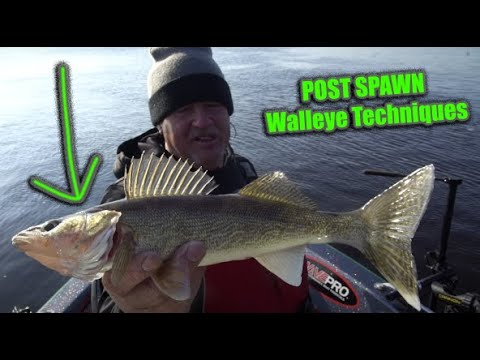 POST SPAWN Walleye Fishing Tips