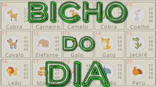 Palpite Jogo do Bicho dia 03/12/2019