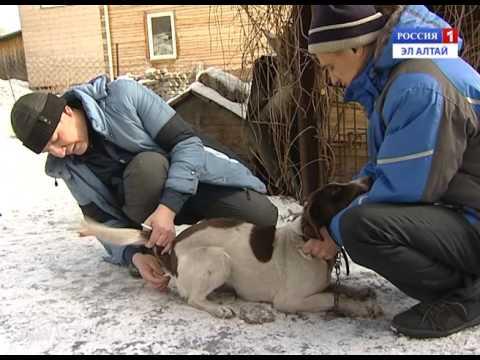 В Горно-Алтайске зарегистрирован случай бешенства