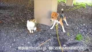 琵琶湖岸の猫のたくさんいる、とある公園。 初めてビリーは猫とご対面。