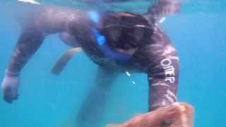 http://sfkagoshima.nobody.jp/ 錦江湾での魚突きです。獲物はオオモン...