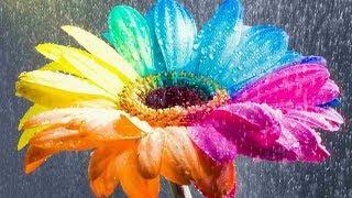 Композиции из цветов. Флористика.  Видео урок.