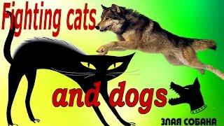 Драка кошки и собаки/ Дружба котов и собак / Friendship cats and dogs / Смешное видео