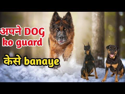 how to train a dog to guard your home / Apne dog ko guard kese banaye / Guard Dog trening