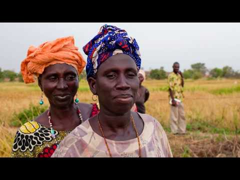 Gambia: IFAD invests in rural women