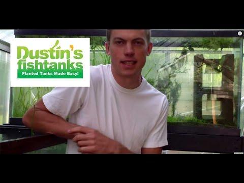 Aquarium algae tips causes of algae in greenhouse for Dustins fish tanks
