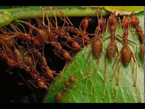 Inilah Beberapa Cara Untuk Mengusir Semut