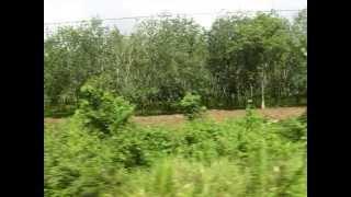 マレー鉄道・バターワース~ハジャイの車窓(Malaysia KTM ButterWorth~Hatyai)