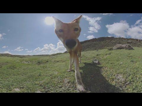 The 500 - a 360° documentary