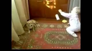 Не кусачая собака