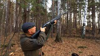 Охота на рябчика в ноябре с собакой Дратхаар