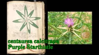 Plants of the Voynich Manuscript 1v thru 10v