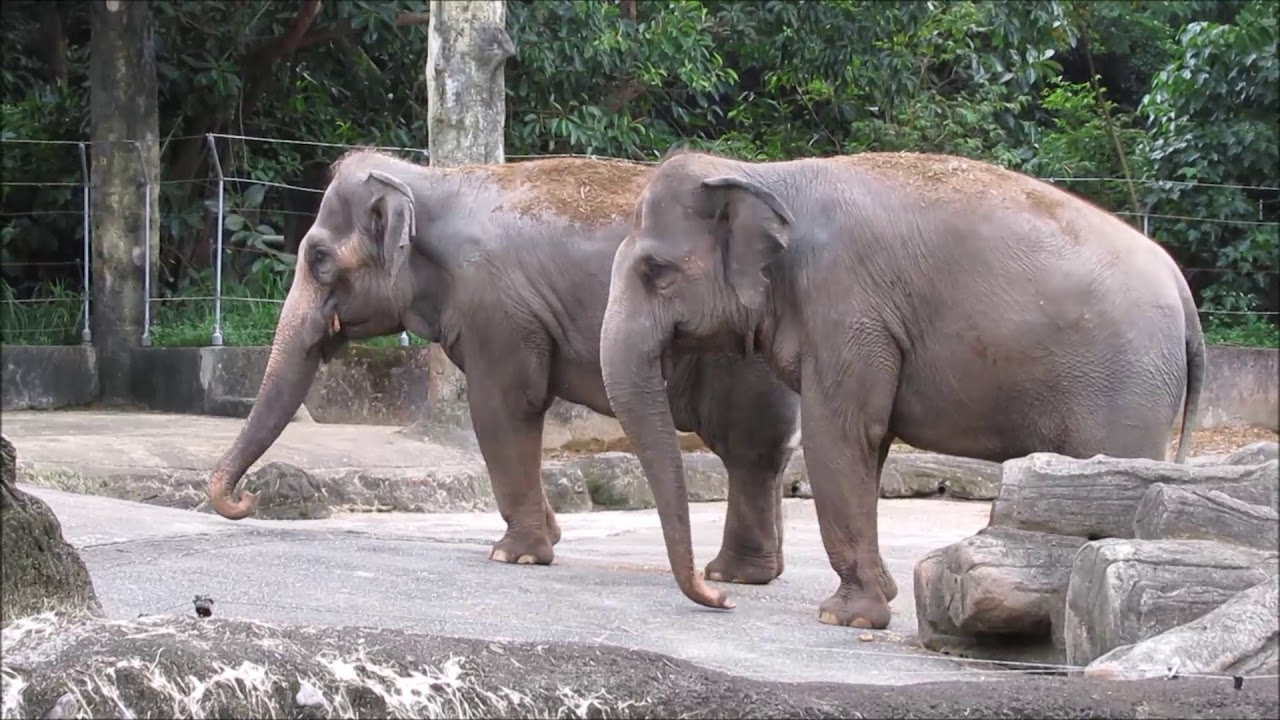 elefantenbaby leipziger zoo