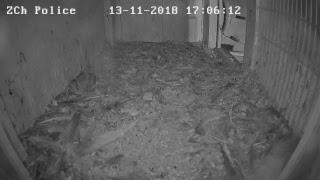 Police Gniazdo – transmisja na żywo