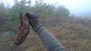 Охота на вальдшнепа осень 2016