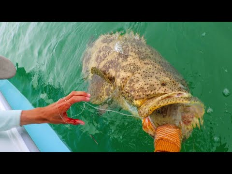 Human VS Giant Mystic Fish Caught Crazy!!